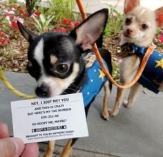 song, anim, shelter dogs, the call, pet, adopt, number, puppi, chihuahua