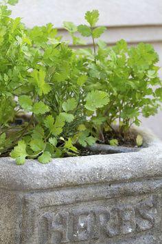 5 delightful flavors for your herb garden
