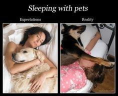 Sleeping with pets real life, small dogs, funni, bed, pet, puppi, expectation vs reality, true stories, little dogs