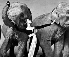 Dovima, la modelo de los elefantes