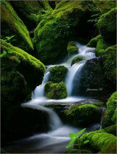 moss waterfall