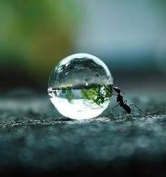 Ant with water droplet