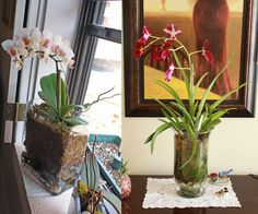 how to make a terrarium for your orchids