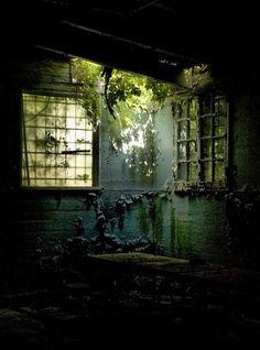 20 urban decay photos