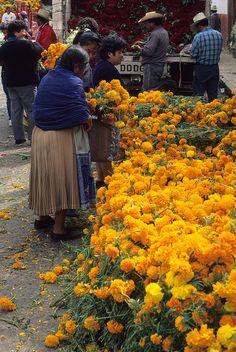 Cempatzuchitl o flor de muertos en el mercado de flores de Teyacapan, México..