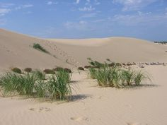 Silver Lake Sand Dunes, MI