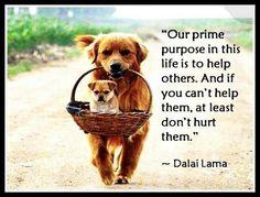 Quote Dalai Lama.