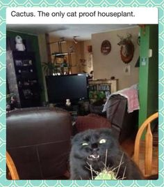 Cat proof houseplant  // funny pictures - funny photos - funny images - funny pics - funny quotes - #lol #humor #funnypictures