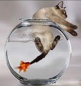 funny animals, karma, revenge, funny cats, funny pictures, funni, kitti, kitty, goldfish
