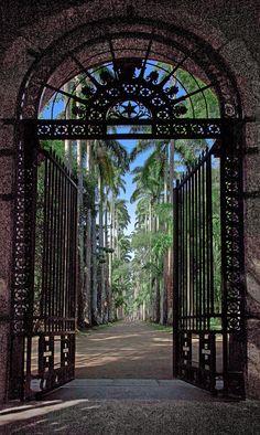 Botanical Garden, Rio de Janeiro, Brazil.