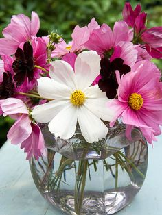 Fish Bowl Flower Arrangement for Mom:  A repurposed miniature fish bowl makes a fun vessel to hold a Mother's Day flower arrangement. Wash out a glass or plastic fish bowl and fill it with water and bright blossoms, such as these cosmos.