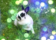 Shine B, Photo, Lomo, effect, PowerCam, Wondershare