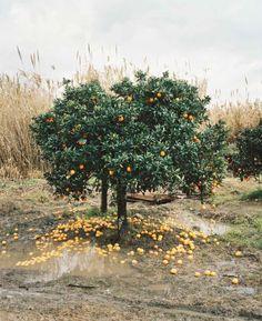 Orange Grove, Rosarno, Italy 2010 - Photo by Eva Leitolf