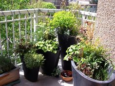 Ideas for the Apartment Homesteader