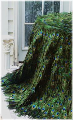 peacock tablecloth!