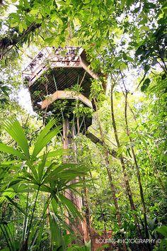 finca bellavista, galleries, circular treehous, costarica, tree houses, costa rica, fincabellavista, trees, place