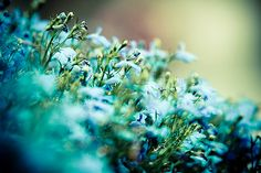 Malmo - Cold Flowers by Manlio K