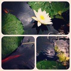 Lost Garden of Heligan #cornwall #flower #garden #lily
