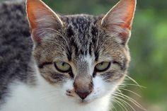 Otra de gatos
