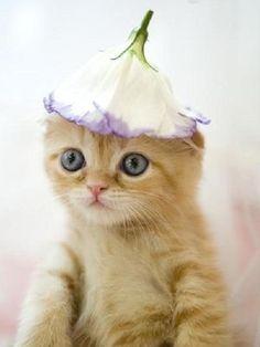 Kitty flower//