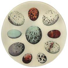 John Derian Company Inc — Egg Chart plate, egg