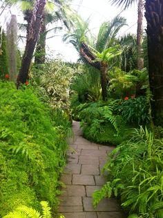 indoor gardening ideas india
