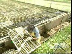 ▶ Hydroponic Lettuce - YouTube
