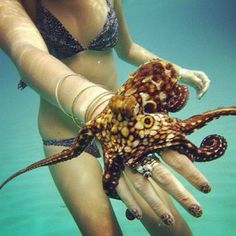 swimming with baby octopus