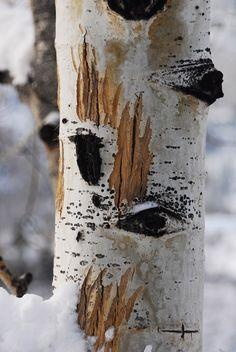 Bear Claws, Aspen, Colorado