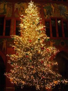 christmas tree (