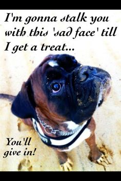 Dogs use their cuteness to get what they want & it works every time!