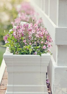 white flowers, windowbox, cleanses, garden yard, tassel, planter, photography, flower boxes, window boxes