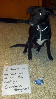 Original dog shaming