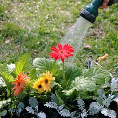 8 Tips on How Water Your Container Garden