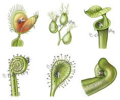 carnivorous plants | Carnivorous plants