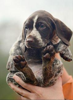 das pup