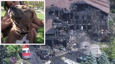 Pit Bull Saves N.Y. Woman from House Fire