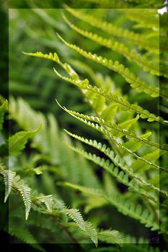 Planten met rood blad