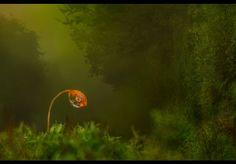 Mysterieus moszaadje. Door communitylid IreneLommers - NG FotoCommunity ©