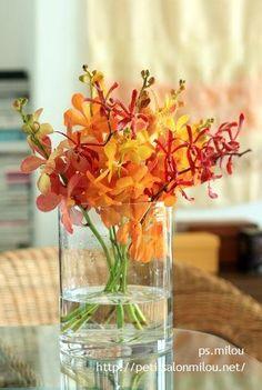 Orchid Arrange