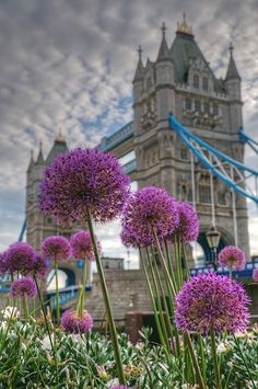 Spring flowers near Tower Bridge in London
