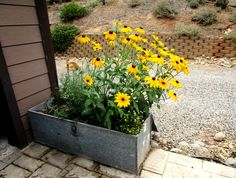Creative containers: Vintage toolbox planters! Large toolbox planter jazzes up this corner of the garage