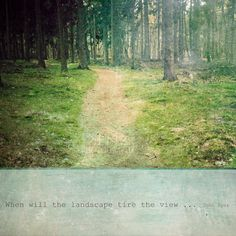 Landscape photography Woodland Quote  Fine art by ZenzPhotography,
