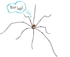 A little Daddy Long Legs Humor