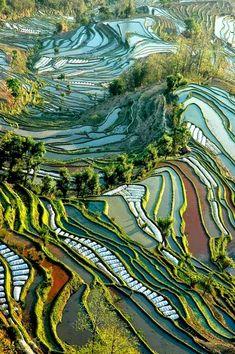 Rice Fields of Yunnan, China