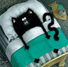 cat art, funny animals, beds, cat illustrations, black cats