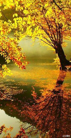 Golden Tree.  Kyoto, Japan. beautiful.