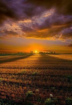 ☀Good Morning - Phil Koch