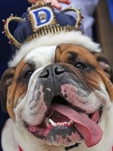 Drake Relays Most Beautiful Bulldog Contest- 2011 winner, Meatball