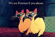 We are Siamese if you don't please...this song has been stuck in my head for days!